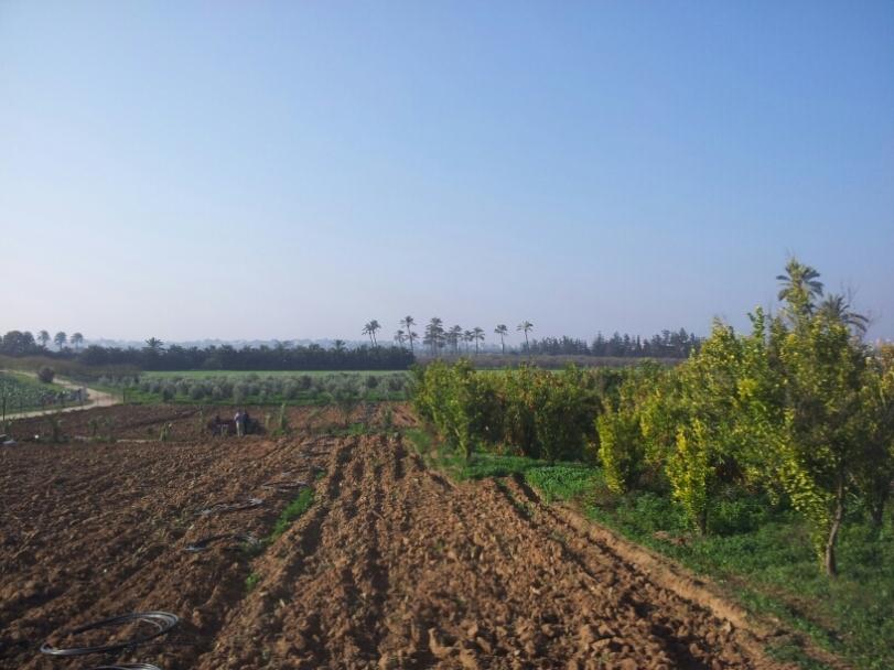 Une terre cultivée